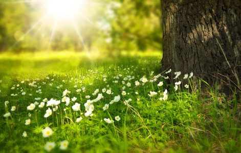 #soleil printemps