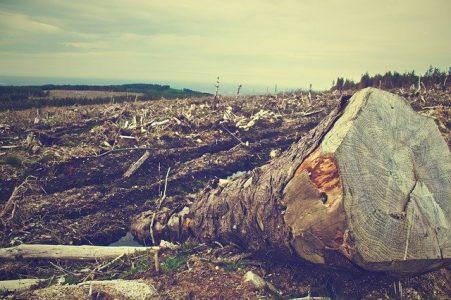 #déforestation