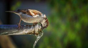 Signez notre pétition pour une eau du robinet sans pesticides