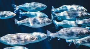 Ressources marines : coup d'arrêt à l'amélioration des stocks de poissons